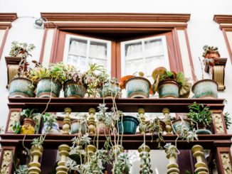 3 Top Tips for Container Gardening