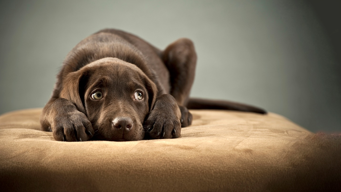 Dog Anxiety Advice & Care | Vets4Pets