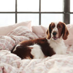 The dog owner's guide to keeping their home fresh